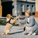Perro-Animales Domésticos